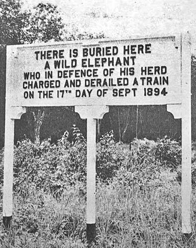 elephant_plate